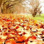 Приметы осени о погоде и природе по месяцам