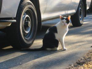 Сбил кошку на машине примета