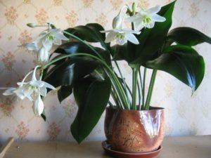 Какие цветы можно держать дома