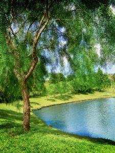 Природа лес река