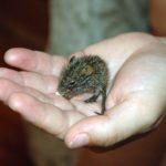 Приметы про мышей. Что делать если в доме завелись мыши