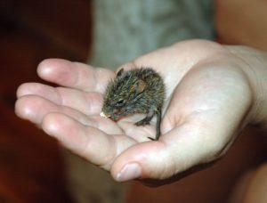Мышь в руке
